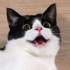 Izzy the Cat