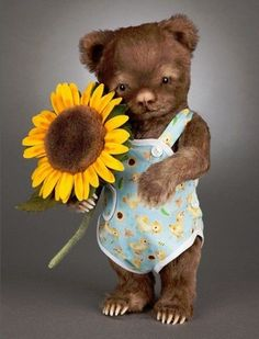 Christopher Bear