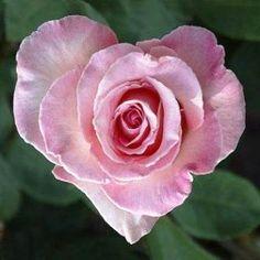 Jaden Rosa