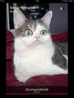 Zyler the Cat