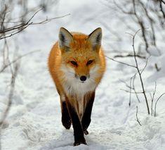 Yuri Fox