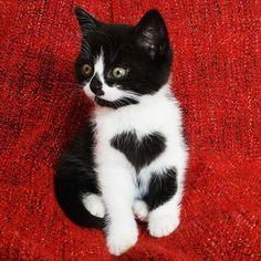Zoe the Cat