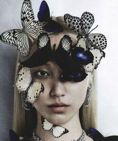 Papillon Soo