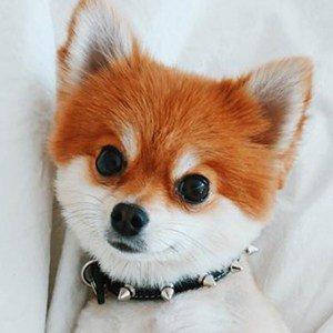 Quincy Fox