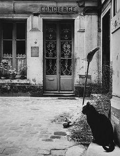Paris Byrdsong