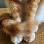 Max the Cat