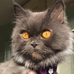 Bobbie the Cat