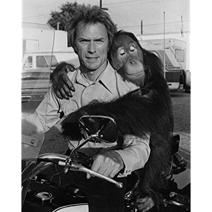 Manis the Orangutan